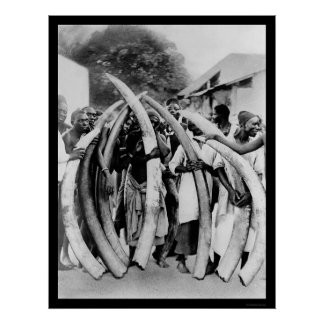 Natives with Ivory Tusks in Dar Es Salaam 1885 Poster