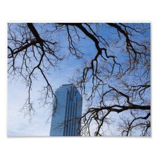 Natural and Artificial in Dallas, Texas Photograph