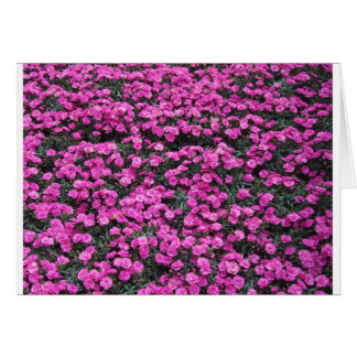 Natural background of purple carnation flowers card