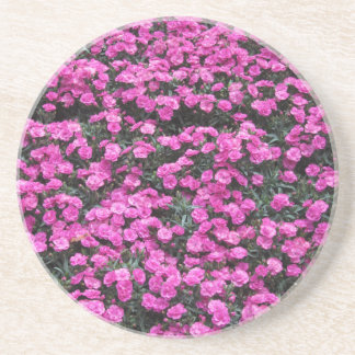 Natural background of purple carnation flowers coaster