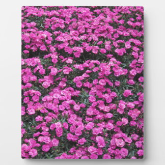 Natural background of purple carnation flowers plaque
