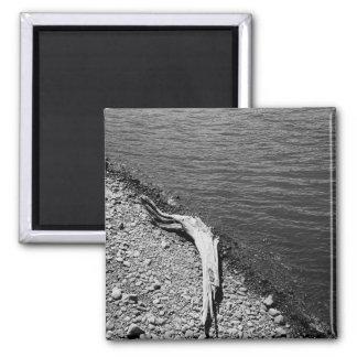 Natural Balance - Driftwood Still Life Magnet