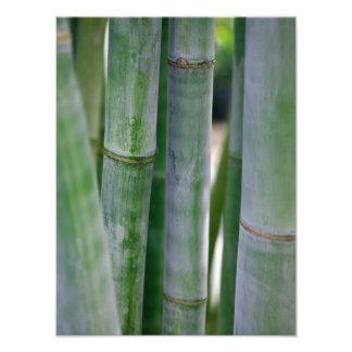Natural Bamboo Zen Background Customized Template Photo Art