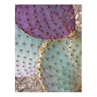 Natural Beauty...Wonderful Cactus Colors... Postcard