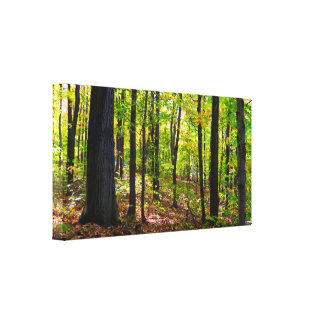 Natural Canadian Forest Canvas Print