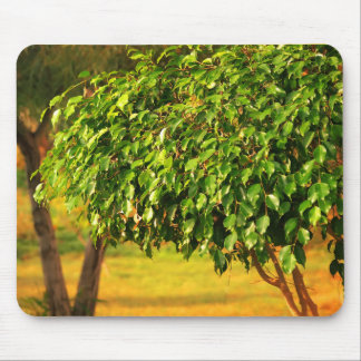 natural  collection mouse pad