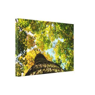 Natural Green and Yellow Trees Canvas Print