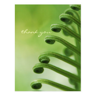 Natural Green Curly Leaf Post Card