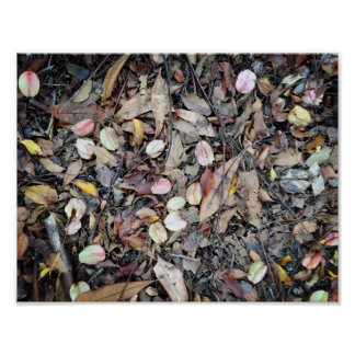 Natural ground with fallen off flowers and leaves poster