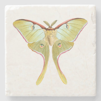 Natural History Art Fossil Butterfly Stone Coaster