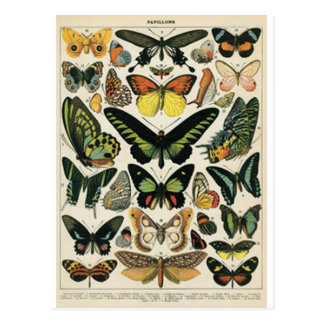 Natural History Butterfly Tarjetas Postales