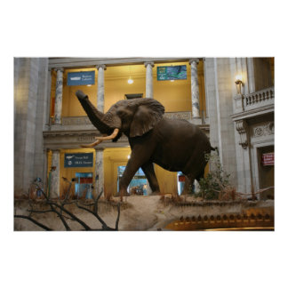 Natural History Museum Elephant Poster