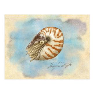 Natural History Nautilus Postcard