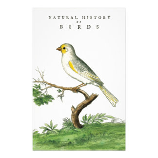 Natural History of Birds - Customized Stationery