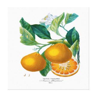 Natural History of Orange Tab 7 Canvas Prints