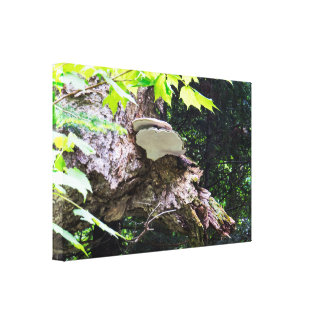 Natural Mushrooms On A Tree Canvas Print