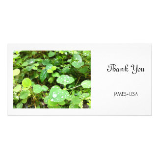 Natural Round Leaves Photo Cards