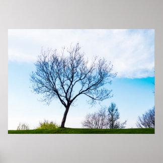Natural Spring Landscape Poster
