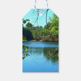 Natural Waters Reflective Trees