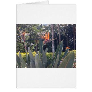 Natural wonders Hawaiian style Greeting Cards