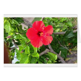 Natural wonders Hawaiian style Card