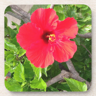 Natural wonders Hawaiian style Coaster