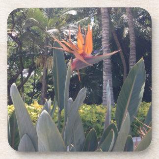 Natural wonders Hawaiian style Coasters