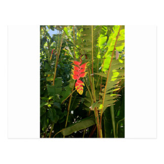 Natural wonders Hawaiian style lobster claw Postcard