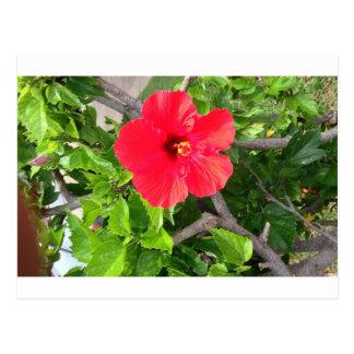 Natural wonders Hawaiian style Postcard