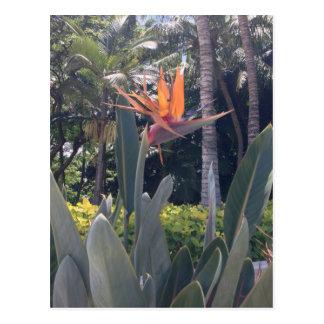Natural wonders Hawaiian style Post Cards
