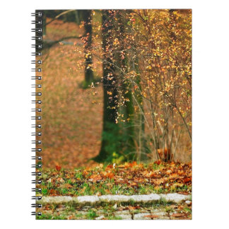 Nature Autumn Into The Woods Spiral Notebooks