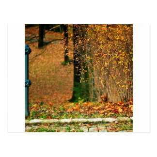 Nature Autumn Into The Woods Postcard