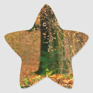 Nature Autumn Into The Woods Star Sticker