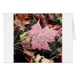Nature Autumn Leaf Raindrops Cards