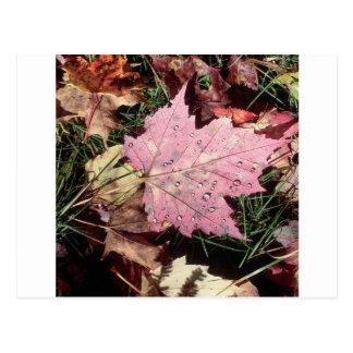 Nature Autumn Leaf Raindrops Postcard
