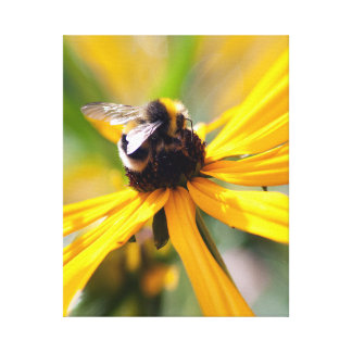 Nature Bee Nectar Yellow daisy Canvas Print