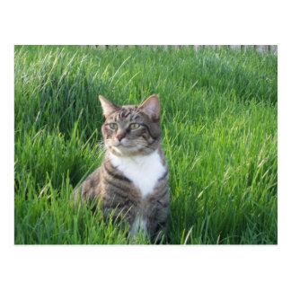 Nature Boy Cat Postcard