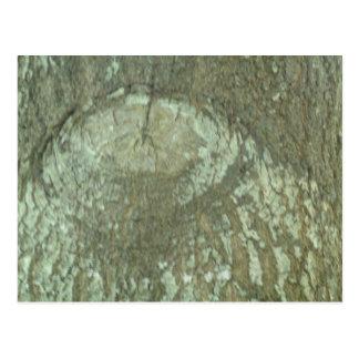 Nature Camouflage Oak Trees Tree Eye Bark Camo Post Card
