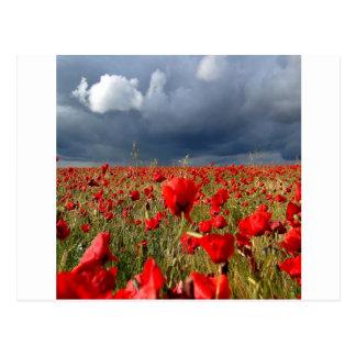 Nature Field Poppy Memories Postcard