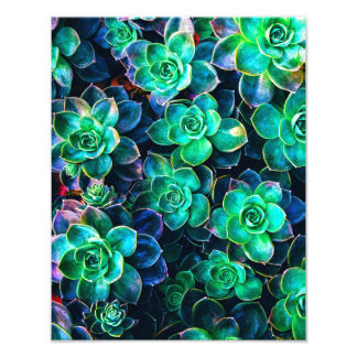 Nature Green Succulent Photo