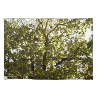 Nature Green Tree in Sunlight Place Mats