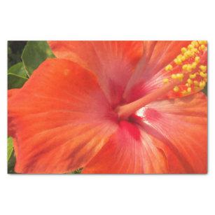 Hibiscus Craft Tissue Paper Zazzle Com Au