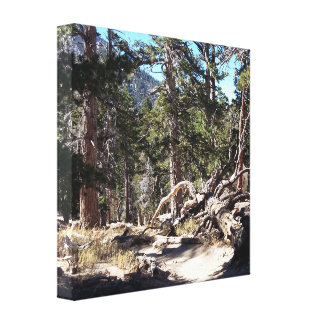 Nature Impression USA Canvas Print