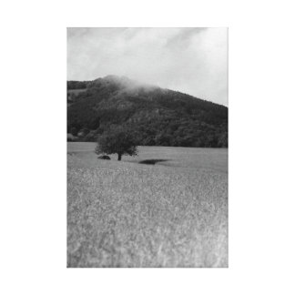 Nature in black and white canvas prints