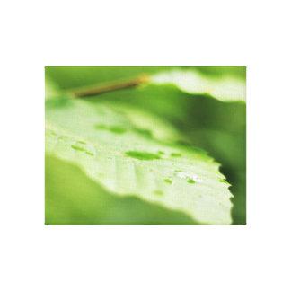 Nature leaf rain drop photo print beautiful green