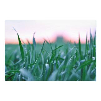 Nature on fields photo print