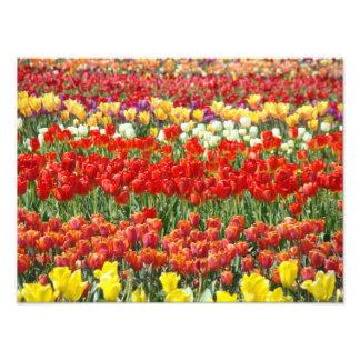 Nature Photography Art prints Tulip Flowers Field Photographic Print