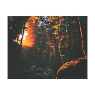 Nature photography | Forest | Sunrise Canvas Print