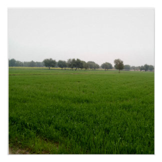 Nature Photography Poster - Wheat Plants fields