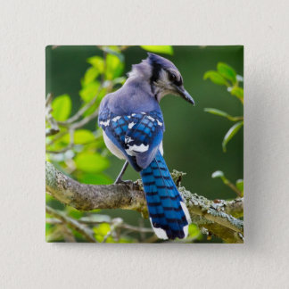 Nature Photography Shy Blue Jay Apparel Gifts 15 Cm Square Badge
